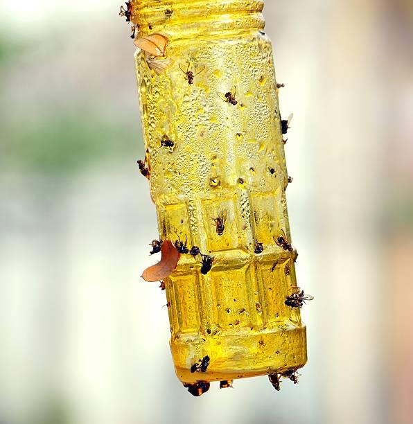 klebrig reißverschluss und insect catcher - mottenfalle stock-fotos und bilder