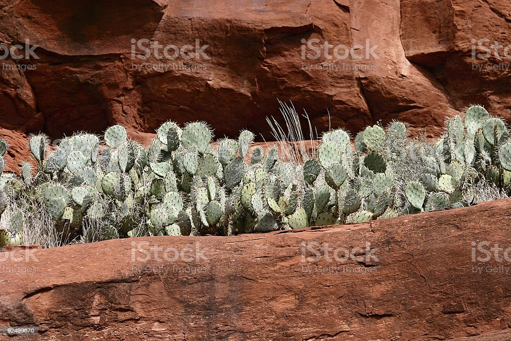 sticky situation royalty-free stock photo