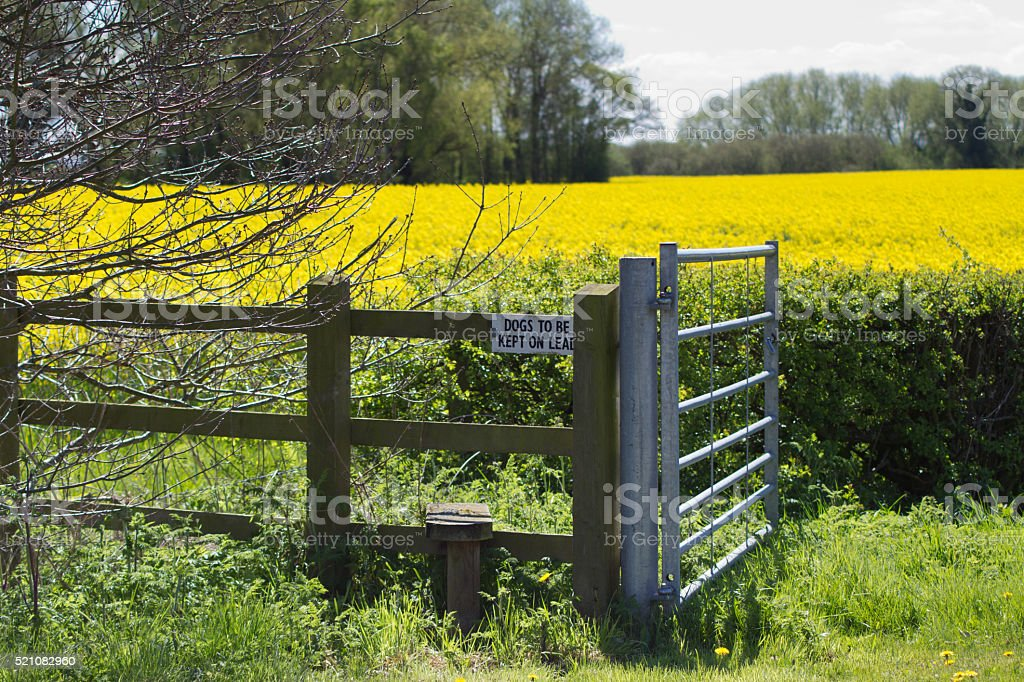 Stile and gate giving access to the English countryside stock photo