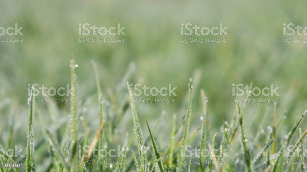Still Dew 1 - Royalty-free Close-up Stock Photo