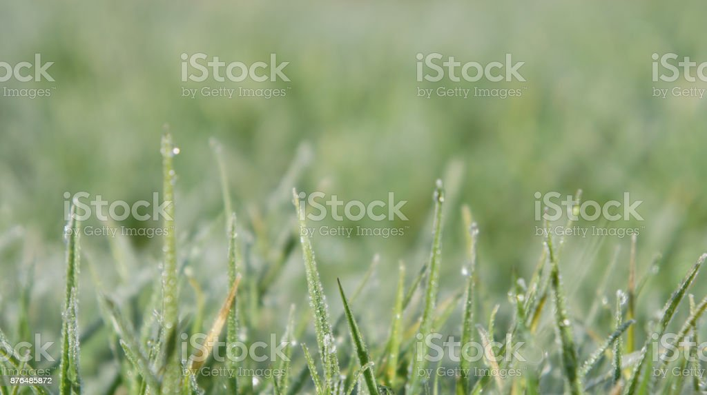 Still Dew 1 stock photo