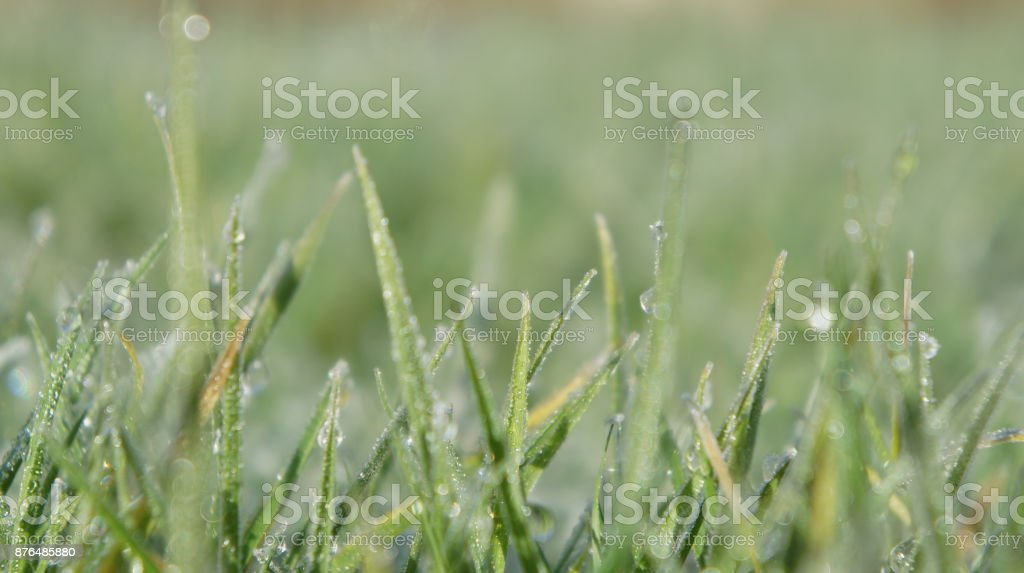 Still Dew 2 royalty-free stock photo