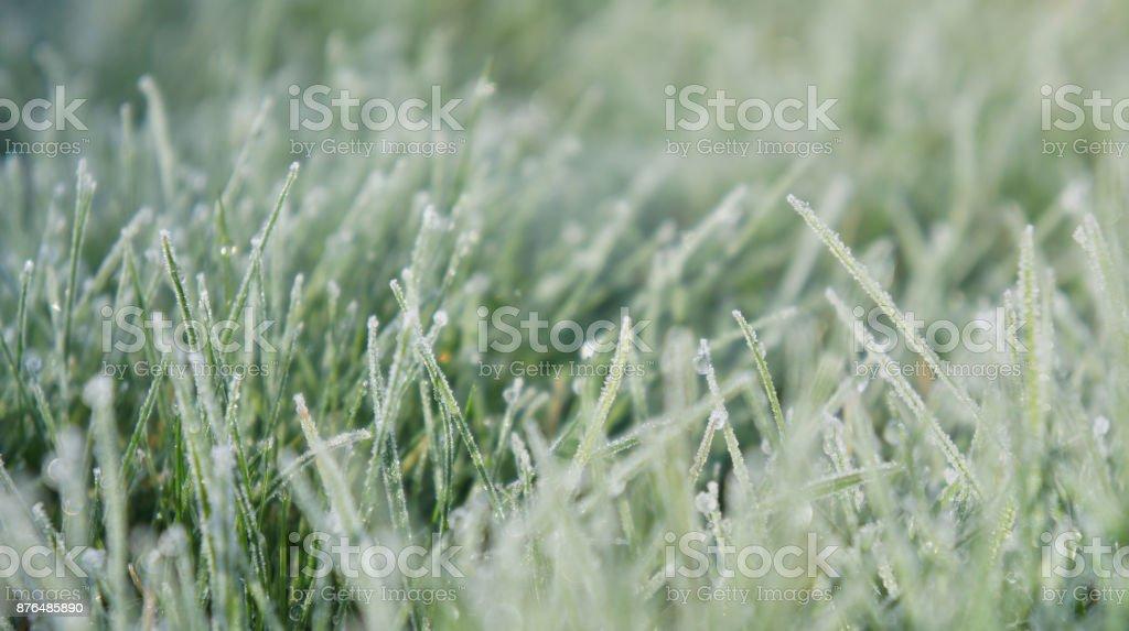 Still Dew 3 - Royalty-free Close-up Stock Photo