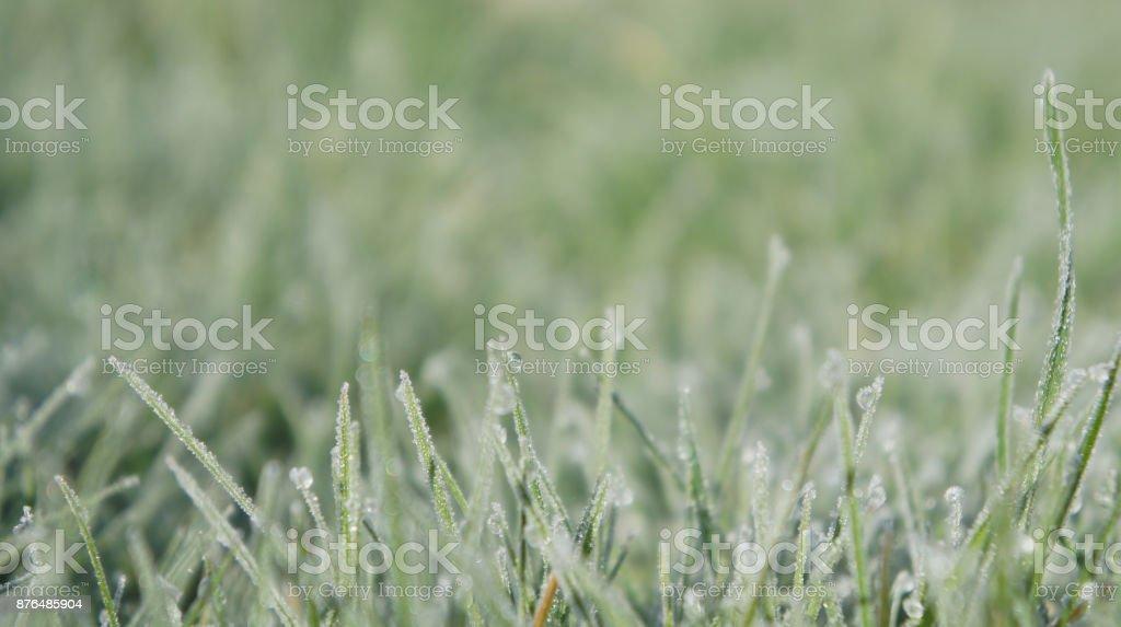 Still Dew 4 - Royalty-free Close-up Stock Photo