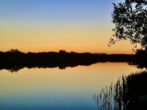 Horizontal landscape of orange yellow and blue sunset colors of still calm water at riverbed lake with silhouette outline of reeds trees and riverbank land at Byron Bay Australia