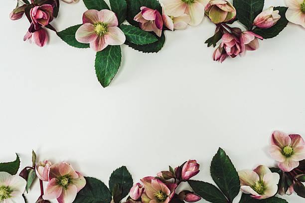 Ainda vida arranjo de flores de fronteira - foto de acervo