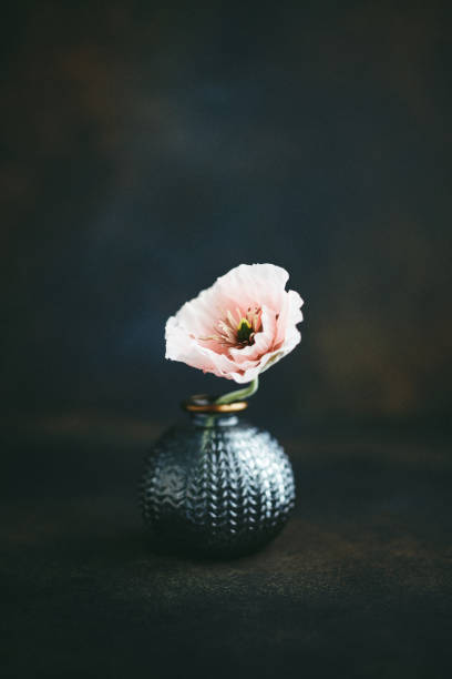 Still life background with gray vase and pink poppy stock photo