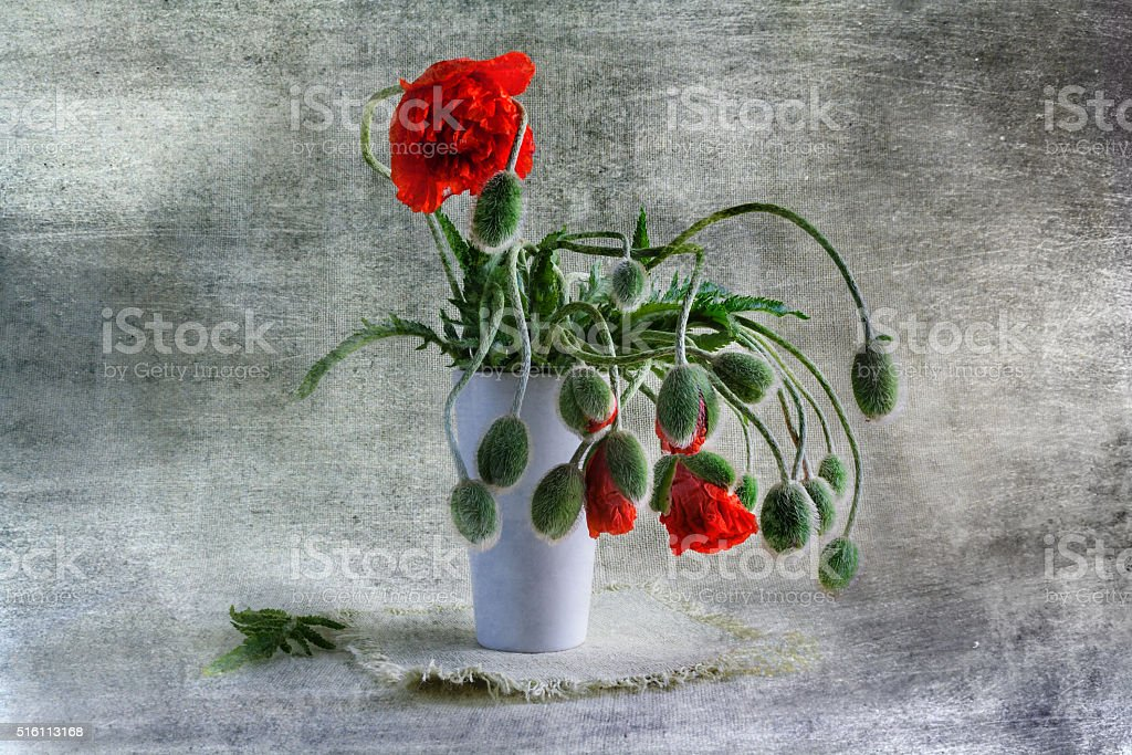 Still Life bouquet red poppies stock photo