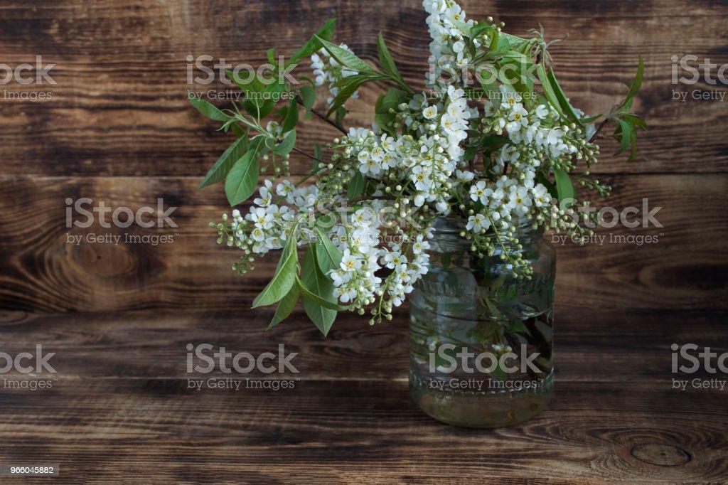 Stilleven. Takken van bloeiende vogel-kers (Prunus padus). - Royalty-free Begrippen Stockfoto