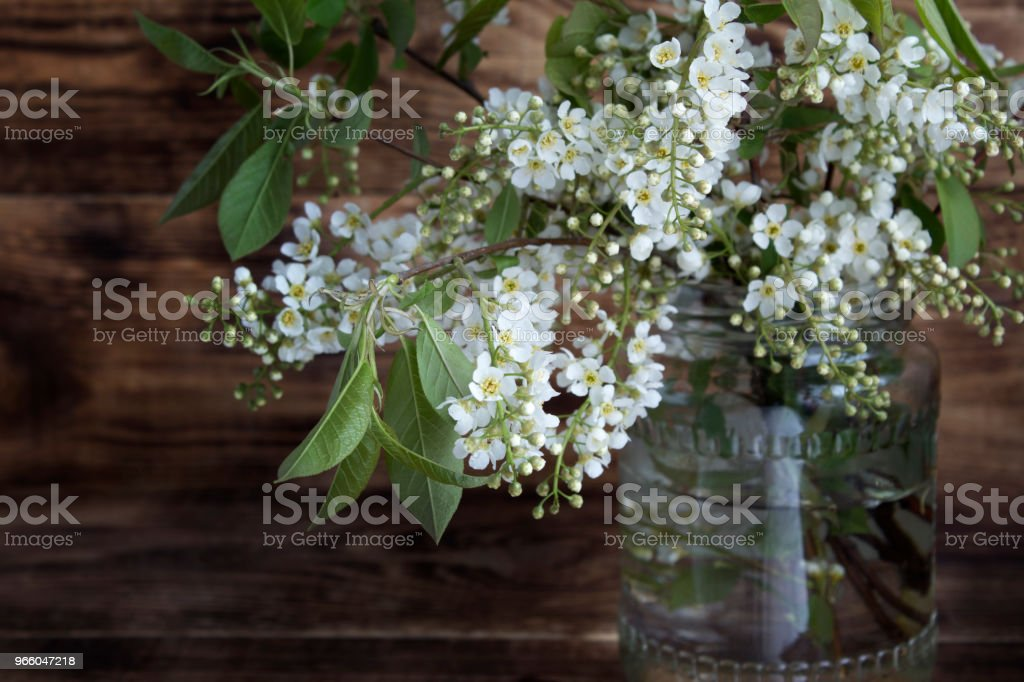 Still life. Branches of blossoming bird-cherry (Prunus padus). - Royalty-free Beauty Stock Photo