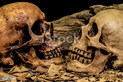 1176385551istockphoto still life couple human skull art abstract background 510221164