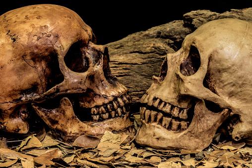 istock still life couple human skull art abstract background 510221164