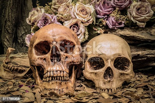 1176385551istockphoto still life couple human skull art abstract background 511788968
