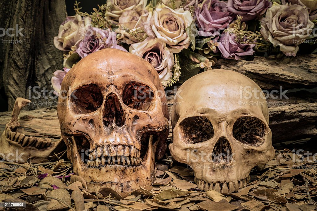 still life couple human skull art abstract background stock photo