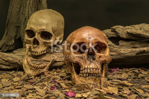 1176385551istockphoto still life couple human skull art abstract background 515198620