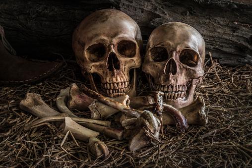istock still life couple human skull art abstract background 522387908