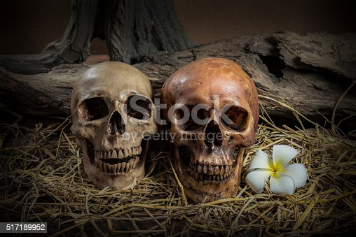 1176385551istockphoto still life couple human skull with Plumeria Flower and hay 517189952