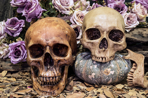 istock still life couple human skull with roses and timber 519614632