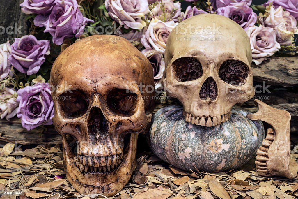 still life couple human skull with roses and timber stock photo