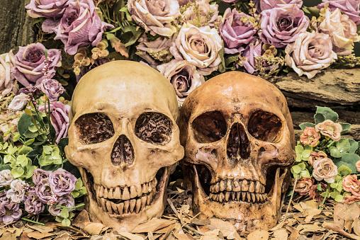istock still life couple human skull with roses 510635030