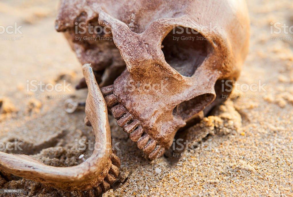 Still Life ,Human Skull on the Sand Beach stock photo