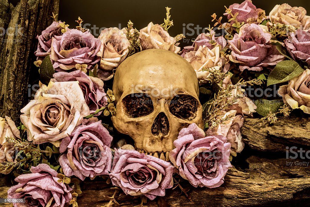 still life human skull with roses background stock photo
