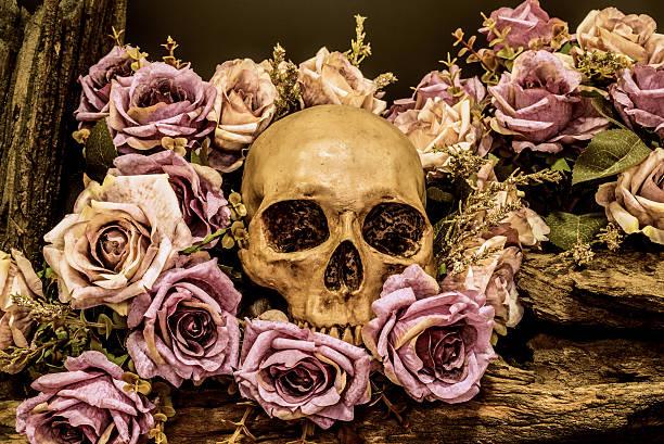 stillleben menschlicher schädel mit rosen hintergrund - gothic bilder stock-fotos und bilder