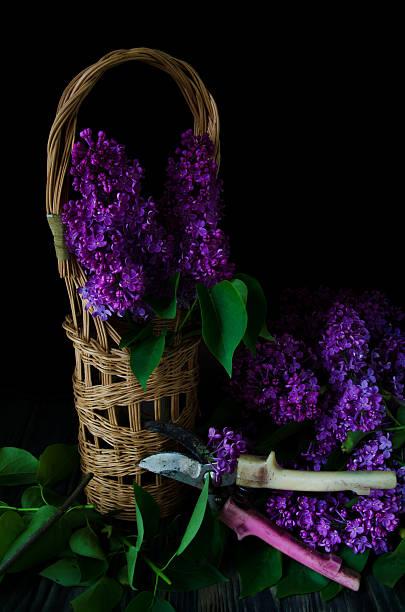 stillleben, lila, flieder, pflaumenfarbene - küche deko lila stock-fotos und bilder