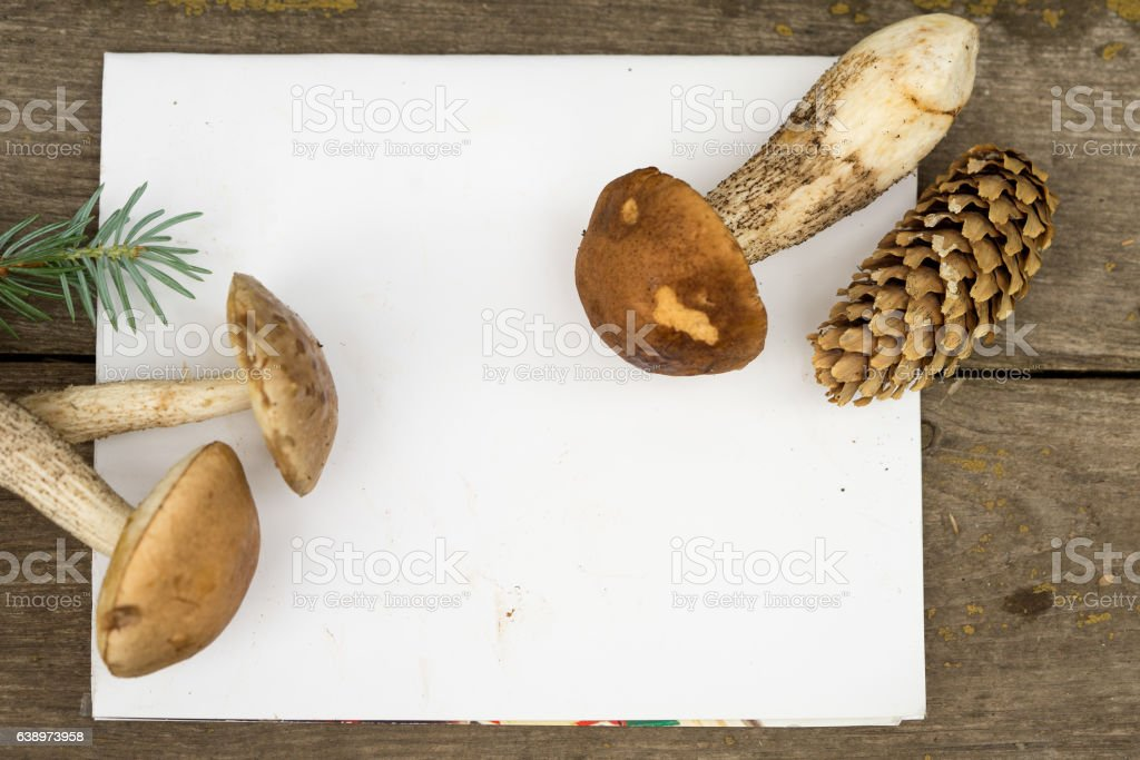 Still Life of Blank Place Card with Mushrooms stock photo