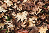 Still life of dry fallen leaves