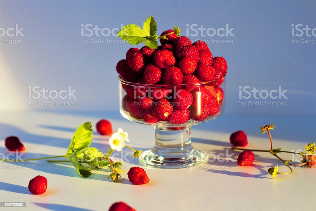 "Still life of fresh forest berries. Wild strawberry (Fragaria vesca Linnaeus) in English - ""Wild strawberry"" or ""Alpine strawberry"", in French - ""Fraise des bois"". - Royalty-free Agriculture Stock Photo"