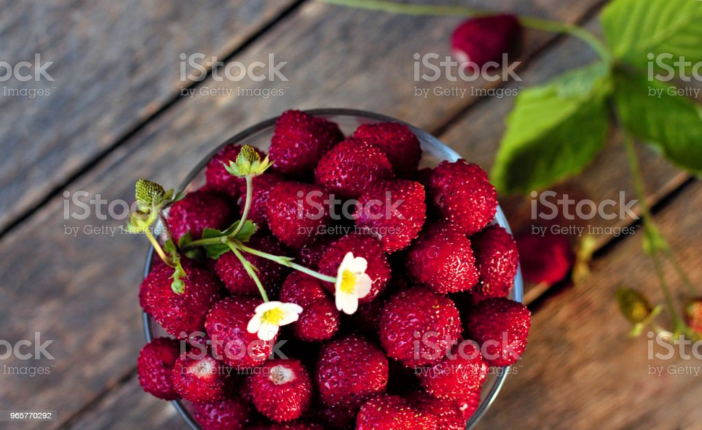 """Still life of fresh forest berries. Wild strawberry (Fragaria vesca Linnaeus) in English - """"Wild strawberry"""" or """"Alpine strawberry"""", in French - """"Fraise des bois"""". - Royalty-free Agriculture Stock Photo"""
