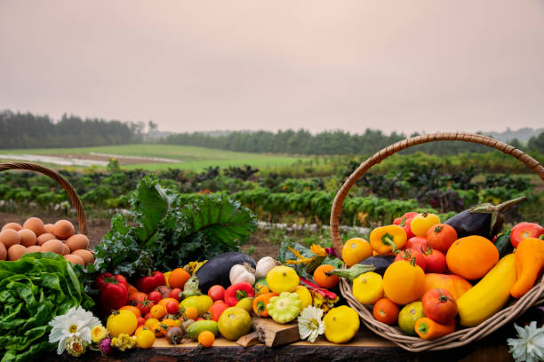 A still life of freshly harvested organic vegetables, produce and eggs pictured on the farm they were grown on. stock photo