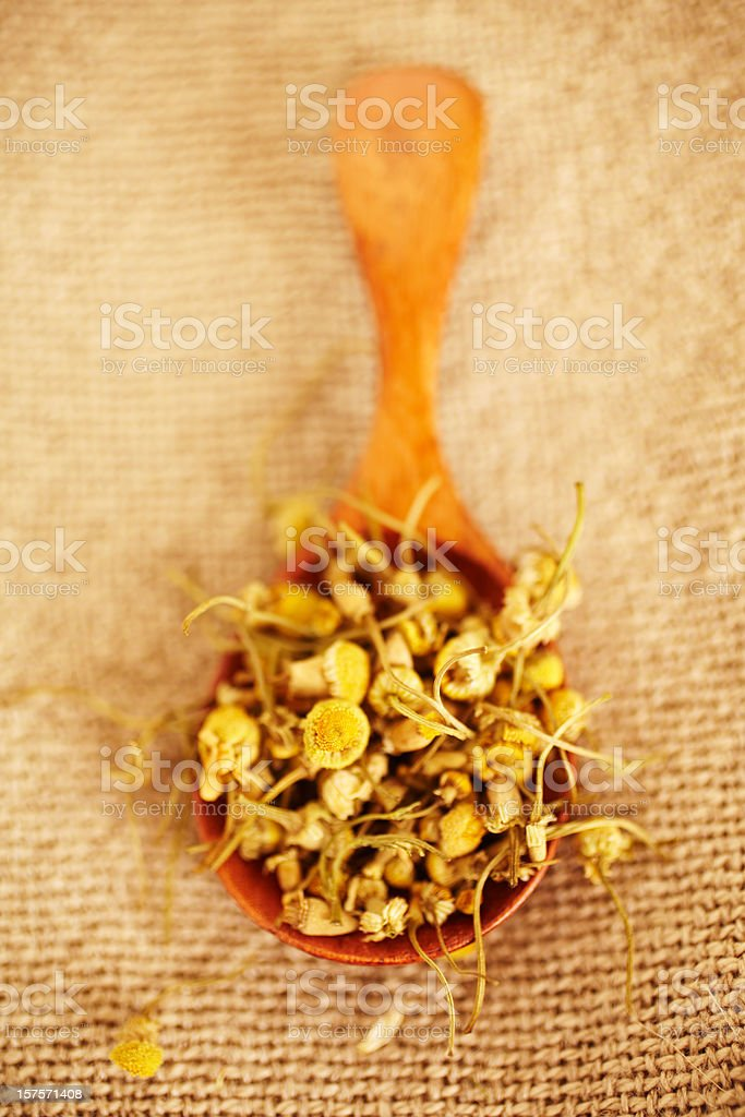 Still Life of organic chamomile in wood spoon royalty-free stock photo