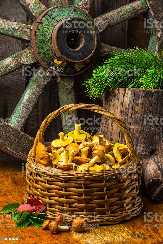 Still life of yellow boletus mushrooms stock photo