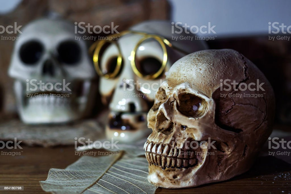 Still life photography human skulls in dark vintage tone royalty-free stock photo