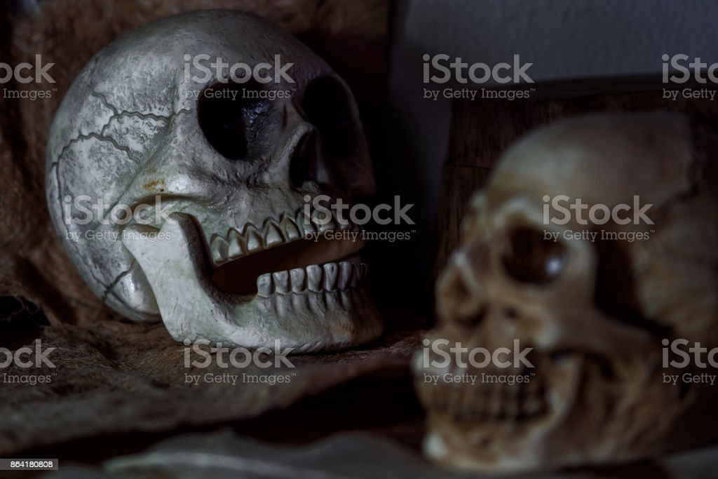 Still life photography human skulls in dark vintage tone royalty-free stock photo