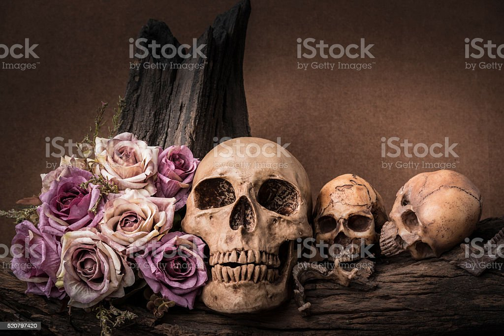 still life photography with human skull and roses stock photo