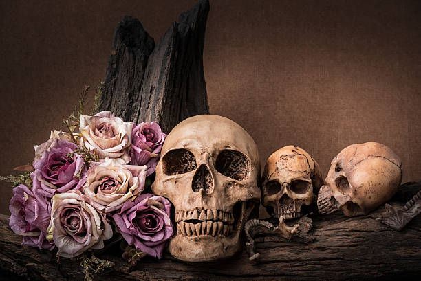 still life photography with human skull and roses - gothic style stock pictures, royalty-free photos & images