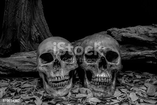 1176385551istockphoto still life photography with human skulls 519614362