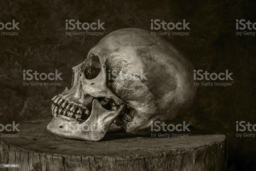 Still Life with a Skull. royalty-free stock photo