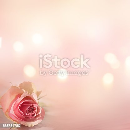 638784780 istock photo Still life with a tender rose 638784780