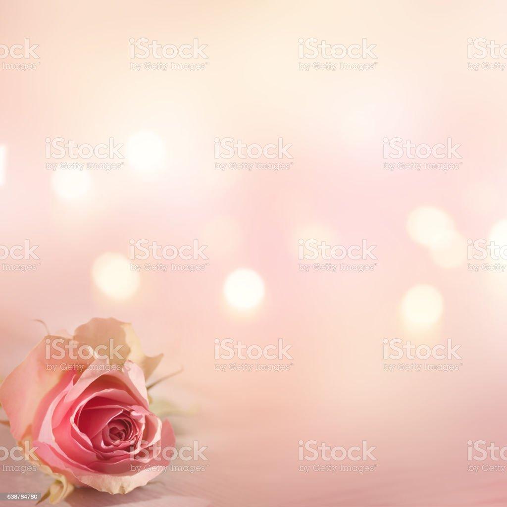 Still life with a tender rose - foto de acervo