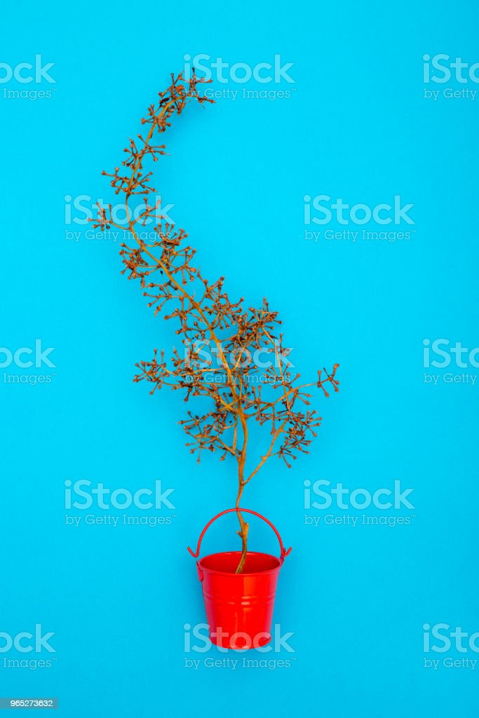 Still Life with an empty grape branch in a red bucket royalty-free stock photo