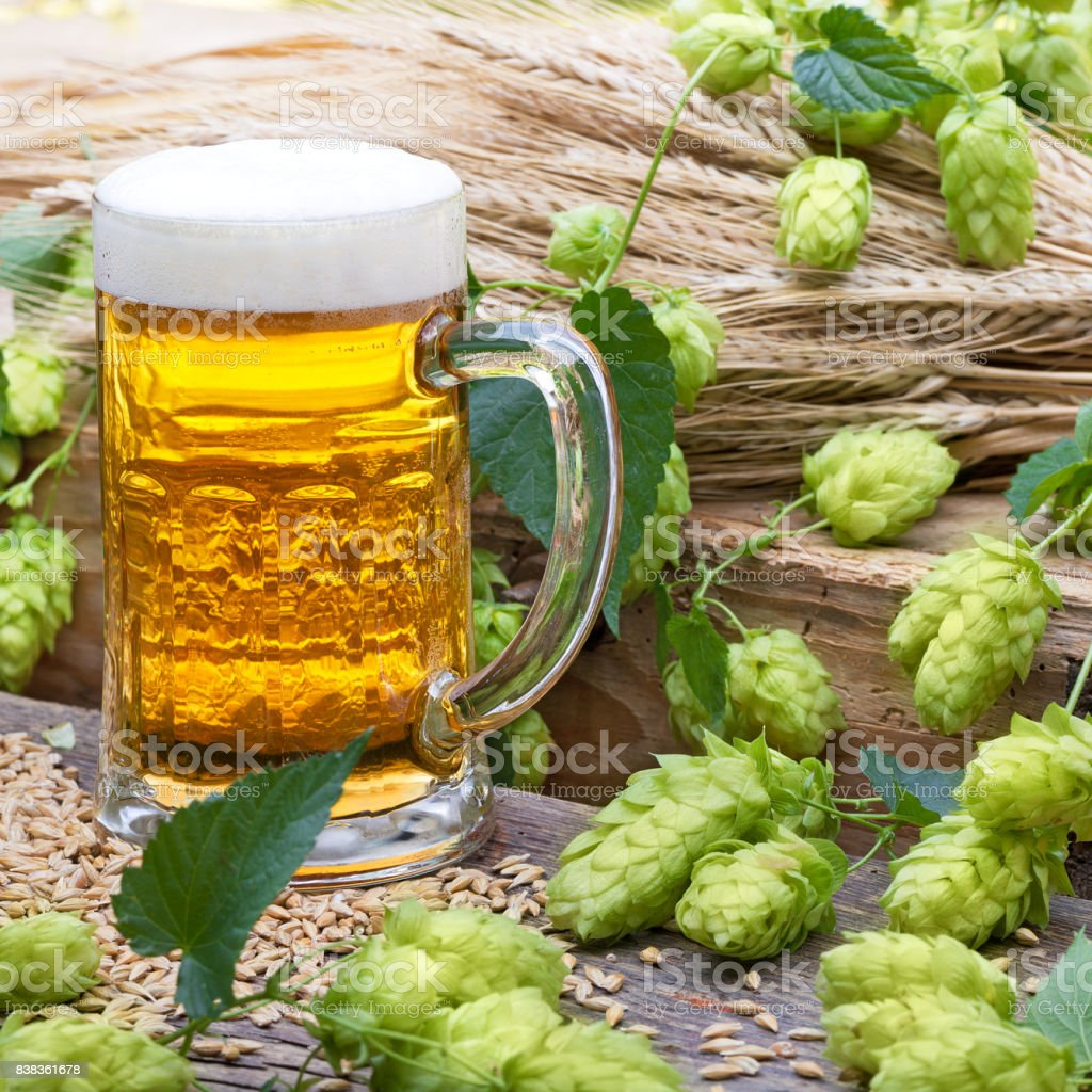 still life with beer glass and hop cones stock photo