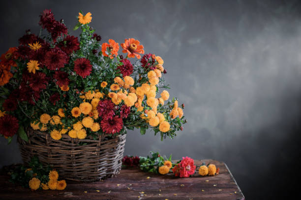 still life with chrysanthemums in basket  on wooden shelf stock photo