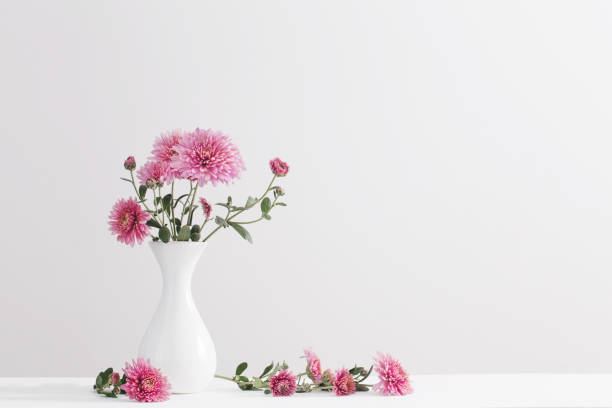still life with chrysanthemums on white background - vase stock pictures, royalty-free photos & images