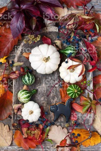 Still life with colorful pumpkins picture id1057662230?b=1&k=6&m=1057662230&s=612x612&h=ggh5nifv1zychfxcm2j9ttwqon0kxgss0we tthhc1i=