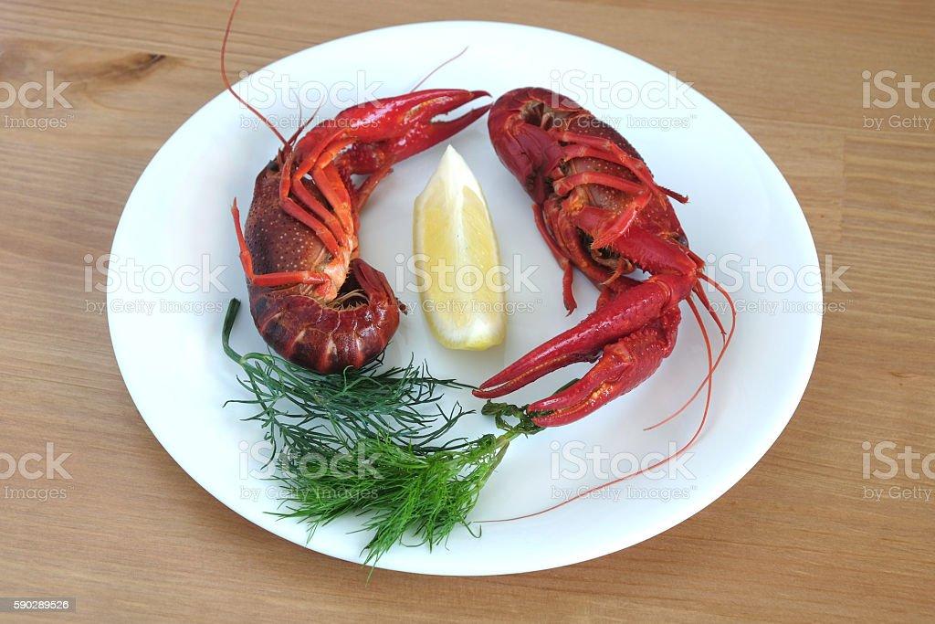 Still life with cooked crayfish isolated on white royaltyfri bildbanksbilder