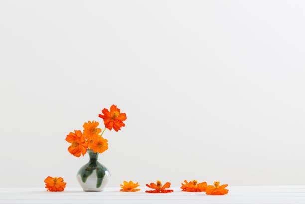Still life with flowers kosmeya picture id645945126?b=1&k=6&m=645945126&s=612x612&w=0&h=of7jcgfvqyfd52p tqdkkjfa5xoye75nppckogcmqmk=